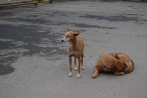 Perros en Connaugh