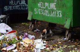 Un gato busca comida entre la basura en Hauz Khas